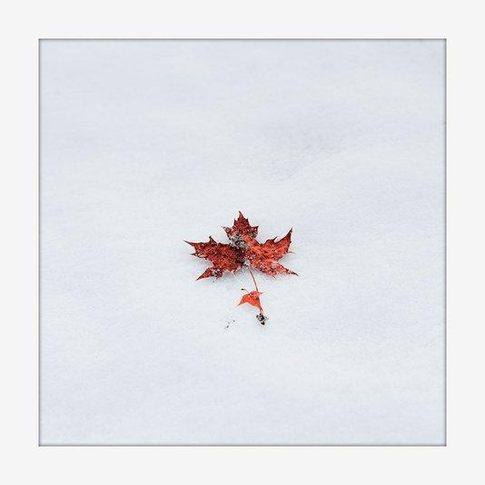 Quadro Moldura Branca Imagem Minimalista Folha de Bordo 20x20cm