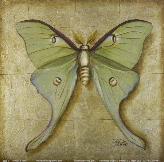 Gravura para Quadros Borboleta Verde 15x15cm