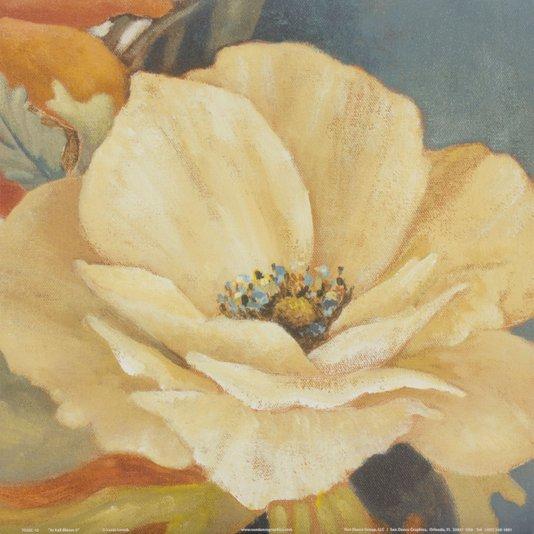 Gravura para Quadros Flor Papoula Branca em Plena Floração 30x30cm