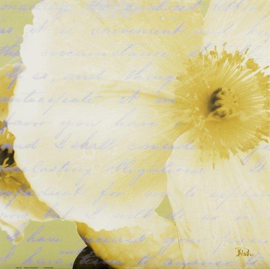 Gravura para Quadros Papoula Branca Escrito ao Vento 46x46cm