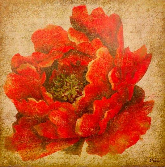 Gravura para Quadros Flor Paeônia Vermelha 46x46cm