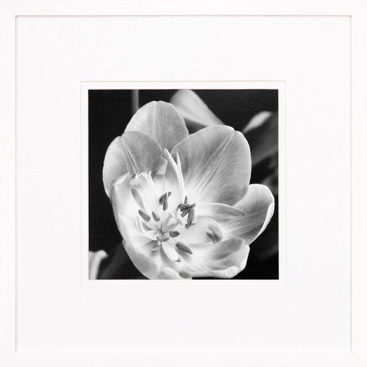 Quadro Decorativo Flor em Preto e Branco com Moldura Laqueada Branca 50x50cm