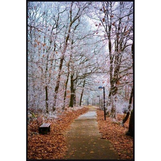 Quadro Tela com Moldura Árvores Paisagem de Inverno 100x150cm