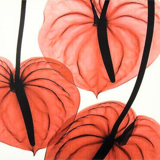 Gravura para Quadros Floral Folhas Vermelhas 30x30cm