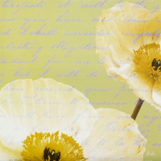 Gravura para Quadros Flor Papoula Branca Escrito ao Vento 46x46cm