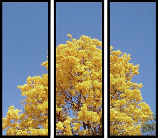 Conjunto de Quadros Decorativos Árvore Ipê Amarelo Kit com 3 Quadros 33x90cm