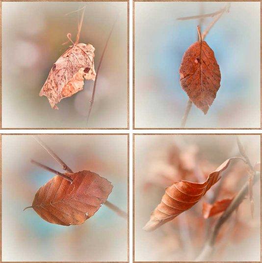Conjunto de Quadros Folhas de Outono 4 Quadros de 30x30 cm