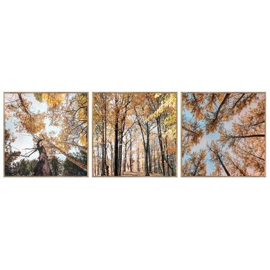 Conjunto de Quadros Paisagens Florestas 3 Quadros de 30x30 Cm
