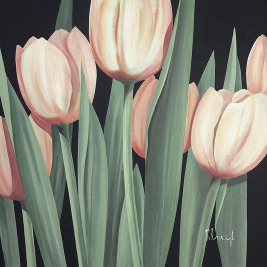 Gravura para Quadros Floral Tulipas Rosas 70x70cm
