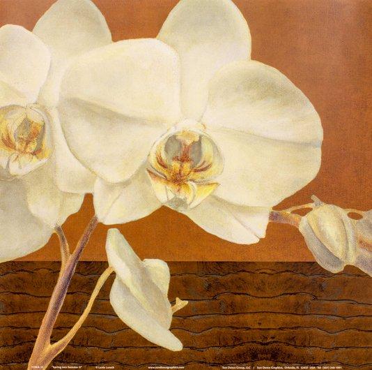 Gravura para Quadros Flor Branca Primavera 30x30cm