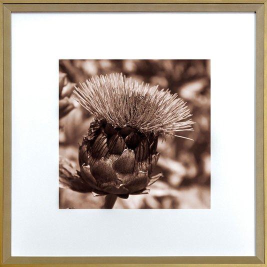 Quadro com Moldura na Cor Dourada Flor Cardo Selvagem Tom Sépia 50x50cm