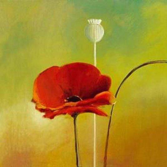 Gravura Floral Papoula Vermelha para Quadros 50x50cm