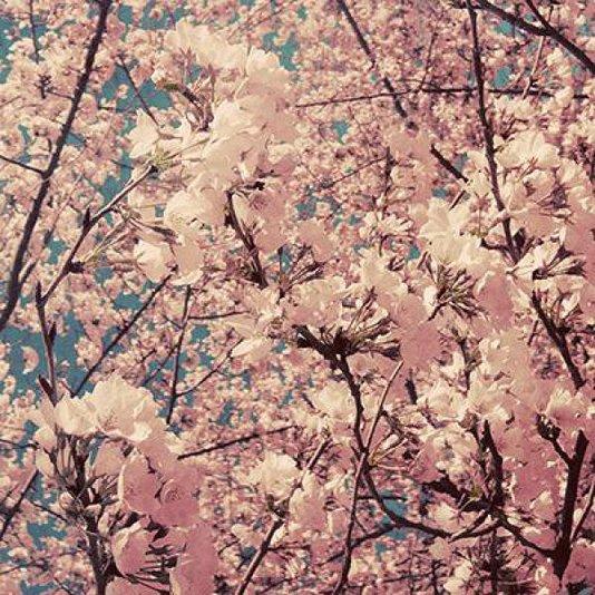 Gravura Floral para Quadros Flores Rosas 30x30cm