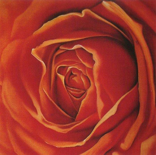 Gravura Floral para Quadros Rosa Vermelha 30x30cm