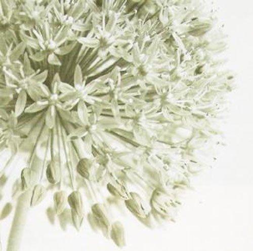 Gravura para Quadro Flores 50x50cm