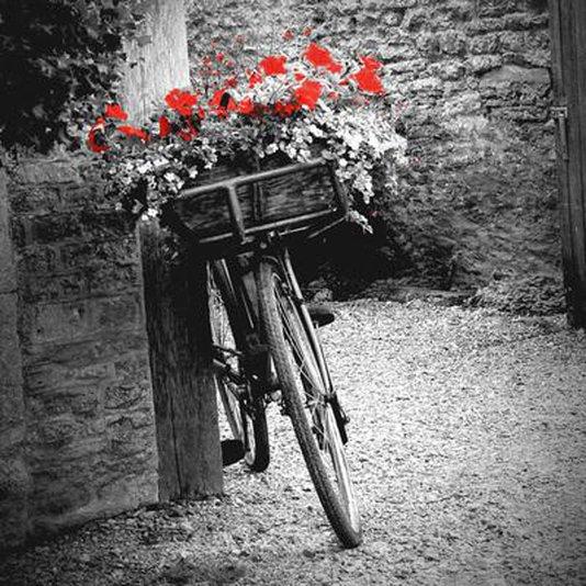 Gravura para Quadros em Preto e Branco Flores Vermelhas 30x30cm