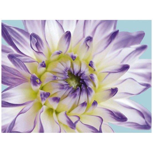 Gravura para Quadros Flor Crisântemo Branco com Lilás 25x20cm