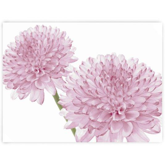 Gravura para Quadros Floral Crisântemo Rosa 25x20cm