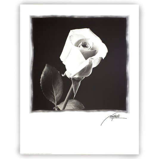 Gravura para Quadros Floral em Preto e Branco 56x71cm