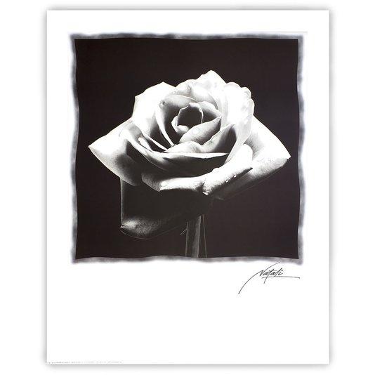 Gravura para Quadros Floral em Preto e Branco II - 56x71cm