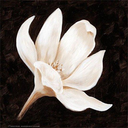 Gravura para Quadros Floral Flor Branca 33x33cm