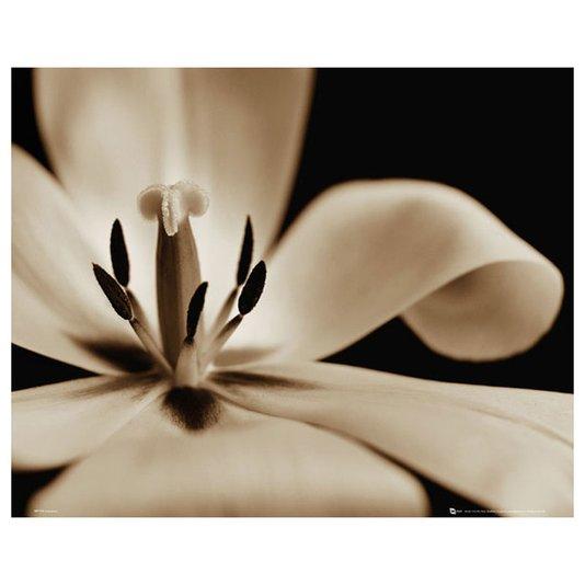 Gravura para Quadros Floral Flor em Preto e Branco 50x40cm DPMP1726