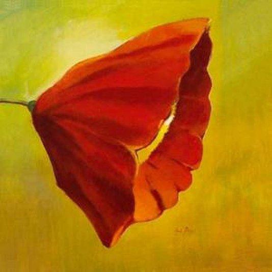 Gravura para Quadros Floral Papoula Vermelha 50x50cm