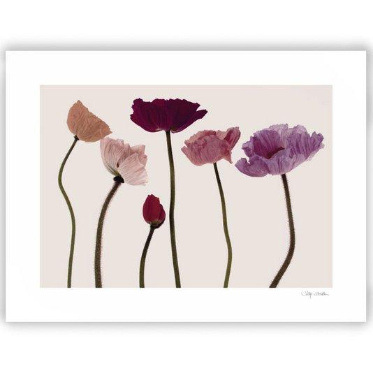 Gravura para Quadros Floral Papoulas 80x60cm