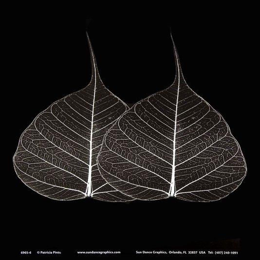 Gravura para Quadros Folhas Minimalistas 15x15cm