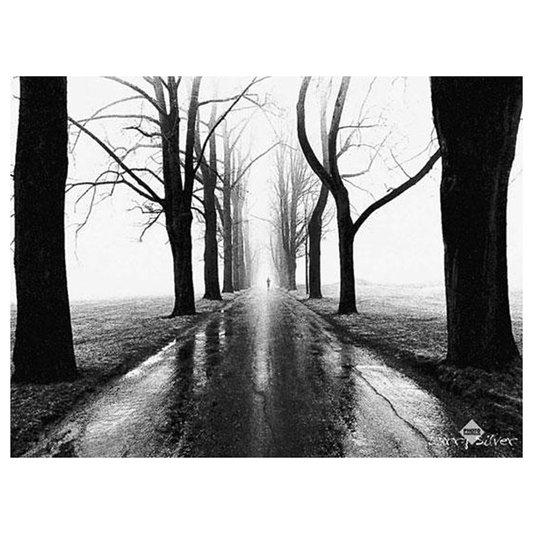 Gravura para Quadros Rua Ladeada por Árvores 80x60cm