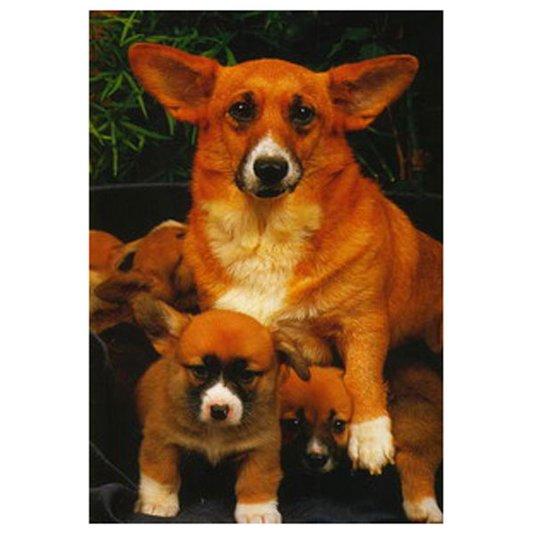 Gravura Poster para Quadros Animais Pet Cachorros 40x50cm