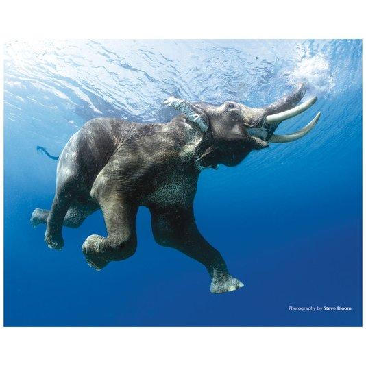 Gravura Poster para Quadros Elefante 50x40cm