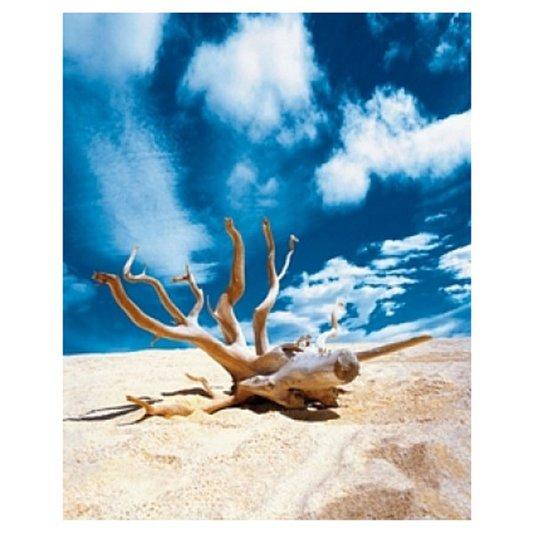 Gravura Poster para Quadros Paisagem Galho Sobre Areia 40x50cm