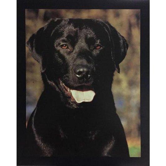 Gravura Poster para Quadros Pet Cachorro Labrador 40x50cm