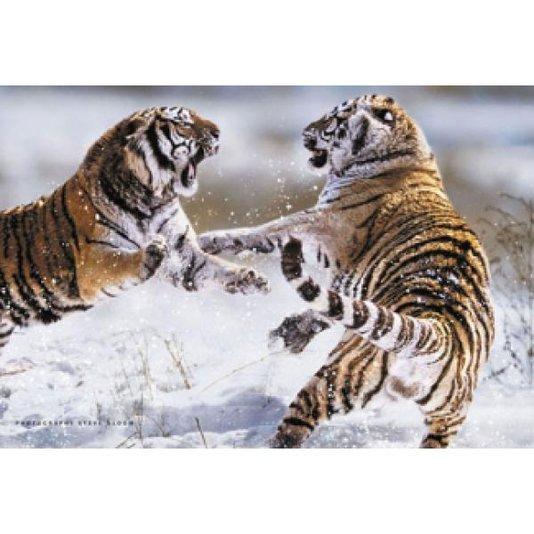 Gravura Poster para Quadros Tigres Brigando 90x60cm