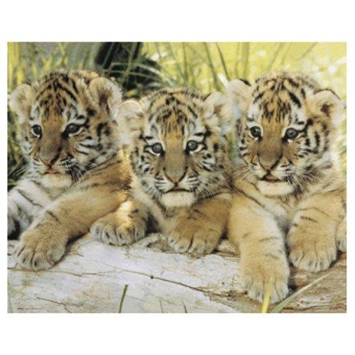 Gravura Poster para Quadros Tigres Filhotes 50x40cm