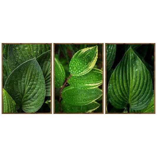 Kit de Quadros Moldura Rústica Folhas Verdes Kit com 3 Quadros de 70x100cm