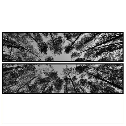 Par de Quadros Floresta em Preto e Branco 2 Quadros de 180x45cm