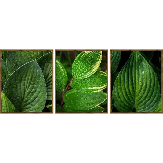 Kit de Quadros Folhagens Verdes Moldura Rústica 3 Quadros de 50x60cm