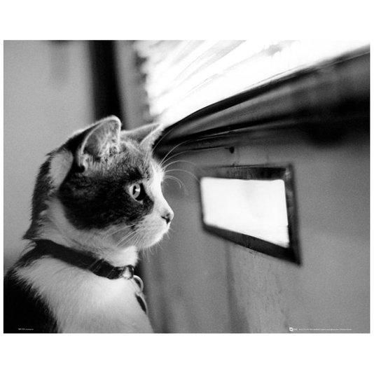 Poster em Preto e Branco para Quadros Pet Gato 50x40cm