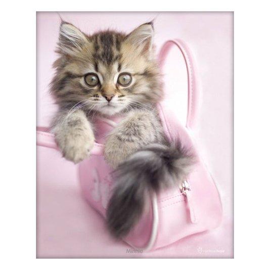 Poster Filhote de Gato Dentro de Bolsa Rosa 40x50cm com/sem Moldura