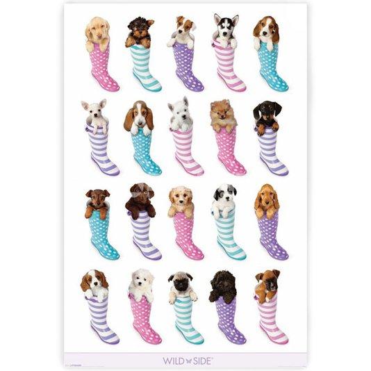 Poster Pets Filhotes Dentro de Botas 60x90cm com/sem Moldura