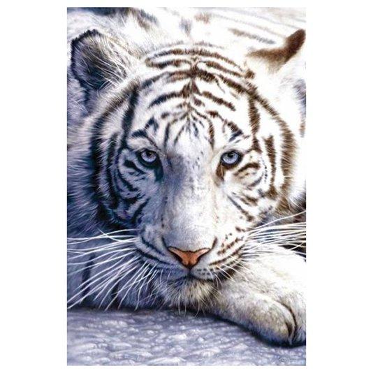 Poster Tigre Branco 60x90cm com/sem Moldura