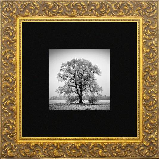 Quadro Clássico com Moldura Dourada Árvore em Preto e Branco 80x80cm