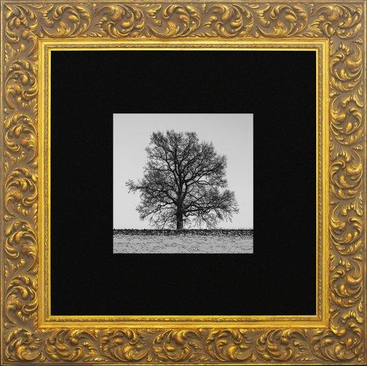 Quadro Clássico com Moldura Dourada Árvore Solitária 80x80cm