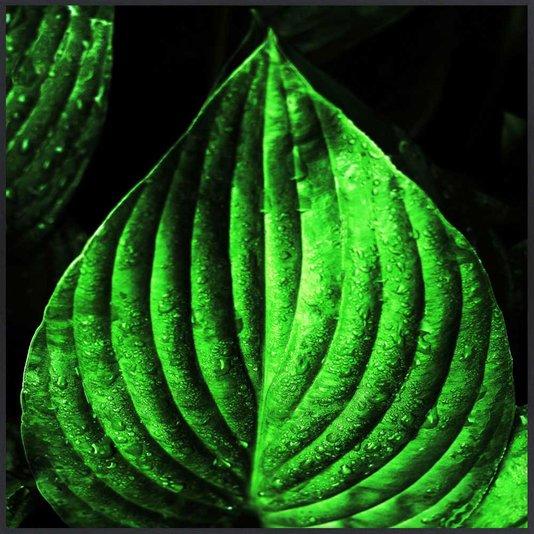 Quadro com Folhas Verdes Decorativo com Moldura Preta 80x80 cm