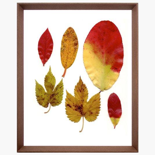 Quadro com Moldura Chanfrada Marrom Folhas de Outono 40x50cm