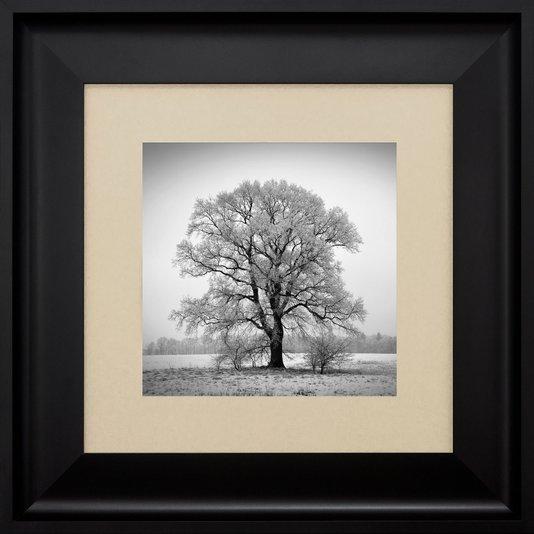 Quadro com Moldura Preta Paisagem Árvore Sem Folhas 60x60cm