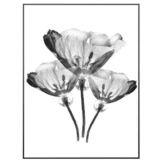 Quadro com Moldura Preta Trio de Flores Efeito Raio-X 60x80cm