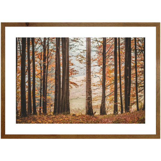 Quadro de Árvores Paisagem Floresta 70x50 cm Moldura Rústica